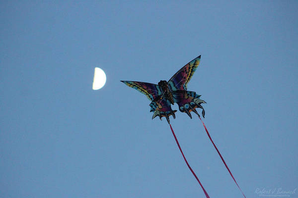 Photograph - Dragonfly Chasing The Moon by Robert Banach
