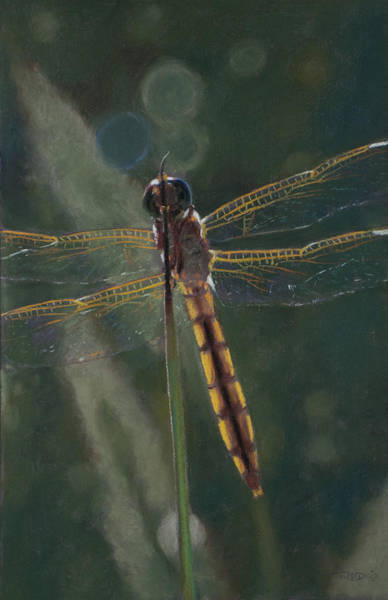 Painting - Dragonfly by Christopher Reid