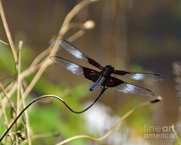 Wall Art - Photograph - Dragonfly by Cindy Treger