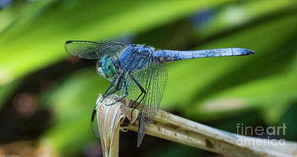 Blue Dragonfly Photograph - Dragonfly Color by Mitch Shindelbower
