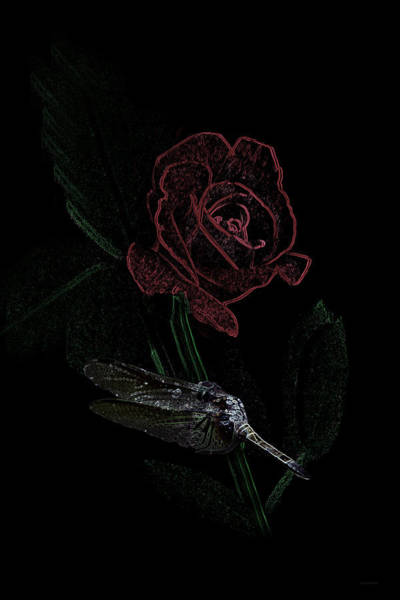 Photograph - Dragonfly Dash With The Rose Vertical by Lesa Fine