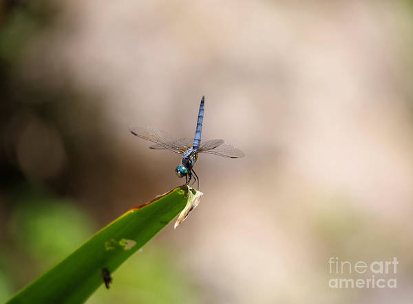 Wall Art - Photograph - Dragonfly Doing A Handstand by Jeff Swan