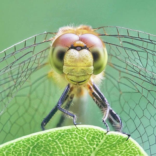 Wall Art - Photograph - Dragonfly Face by Jim Hughes