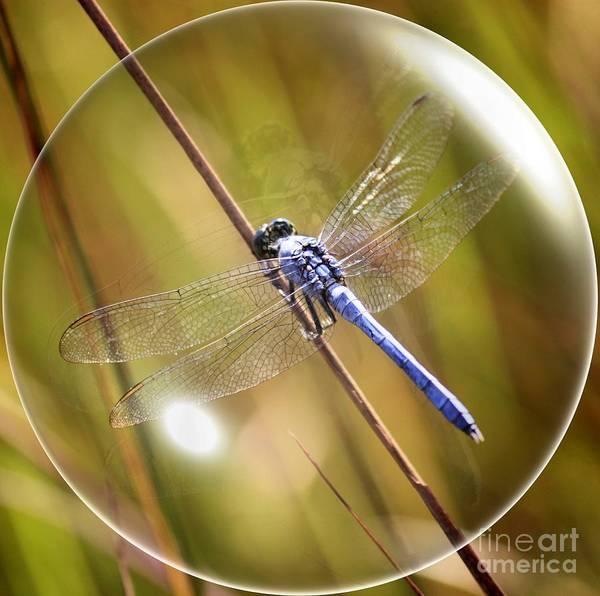 Blue Dragonfly Photograph - Dragonfly In A Bubble by Carol Groenen