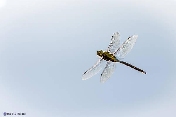 Photograph - Dragonfly In Flight by Teresa Blanton