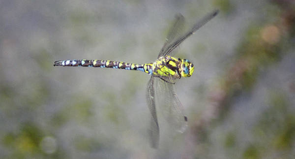 Blue Dragonfly Photograph - Dragonfly by Martin Newman