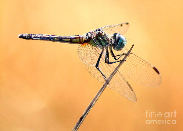 Photograph - Dragonfly Needlepoint by Carol Groenen