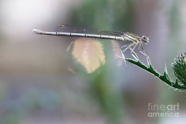 Wall Art - Photograph - Dragonfly On Leaf by Michal Boubin
