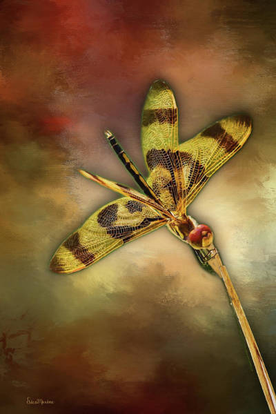 Painting - Dragonfly - Painting by Ericamaxine Price