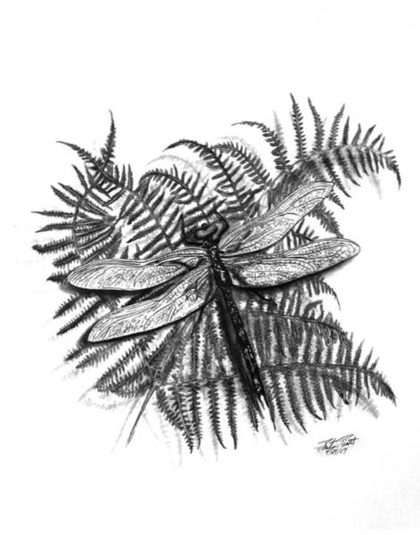 Ferns Drawing - Dragonfly by Peter Piatt