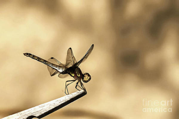 Painting - Dragonfly Resting On The Clothesline by Odon Czintos