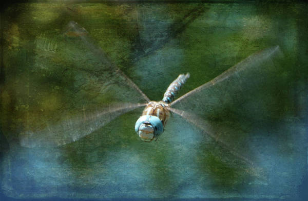 Photograph - Dragonfly In Flight by Marilyn Wilson