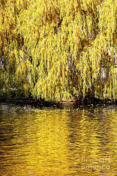 Photograph - Drake Park by David Millenheft