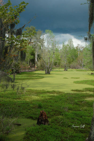 Garden Wall Art - Photograph - Drama In The Swamp II by Suzanne Gaff