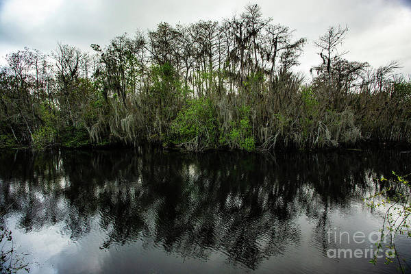 Alligator Alley Photograph - Dramatic Shot Of Cypress Tress by Lisa Top