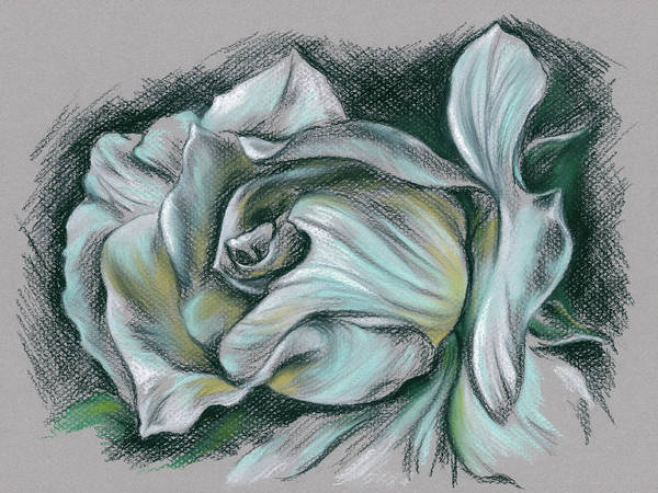 Drawing - Dramatic White Rose by MM Anderson