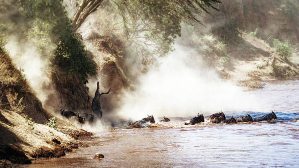 Nature Conservancy Photograph - Dramatic Wildebeest Migration River Crossing by Susan Schmitz