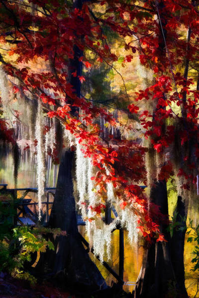 Bald Cypress Digital Art - Draped With Color by Lana Trussell
