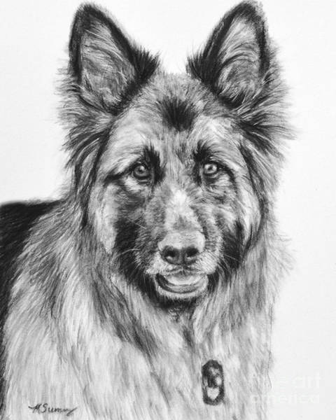 Art Print featuring the drawing Drawing Of A Long-haired German Shepherd by Kate Sumners