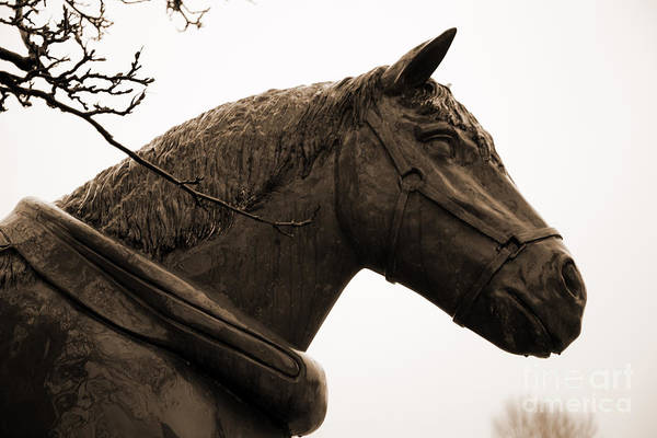 Photograph - Dray Or Heavy Horse Remembered by Brenda Kean
