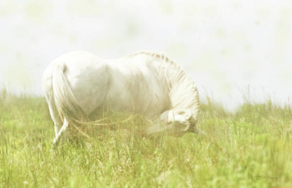 Photograph - Dream Horse by Susan Vineyard