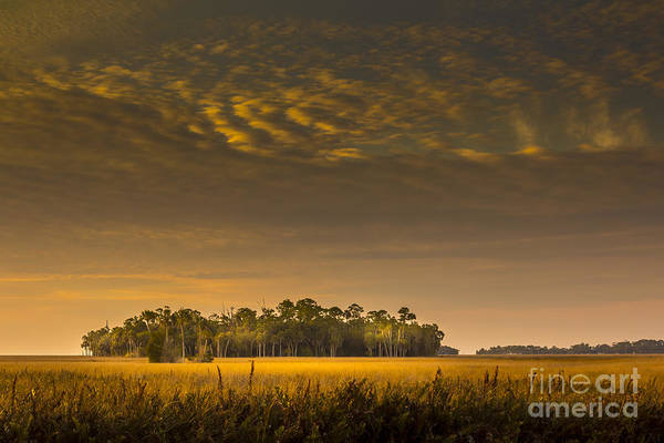 Marshland Photograph - Dream Land by Marvin Spates