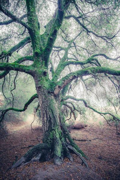 Photograph - Dream Oak 3b by Alexander Kunz