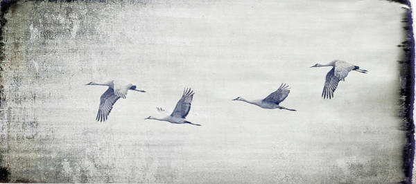 Photograph - Dream Sequence by Sheldon Bilsker