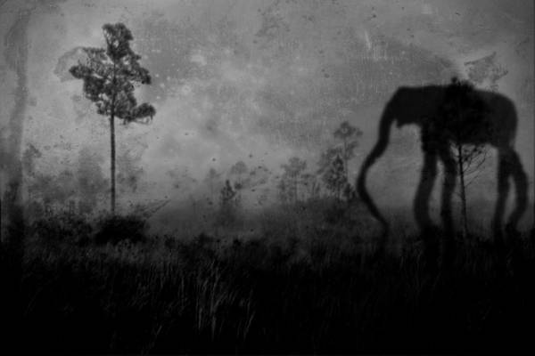 Photograph - Dream Shadows 5119 by Rudy Umans