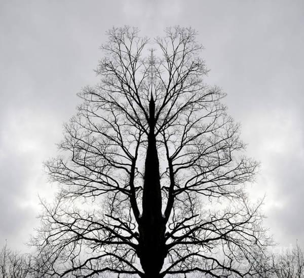 Photograph - Dream Tree by Alana Ranney
