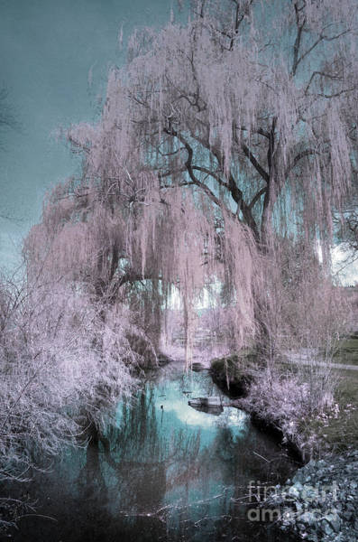 Photograph - Dream Willows by Tara Turner