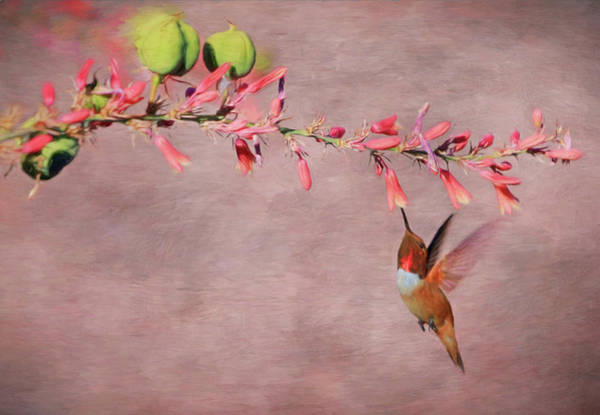 Beautiful Hummingbird Photograph - Dreamin' In Pink by Donna Kennedy
