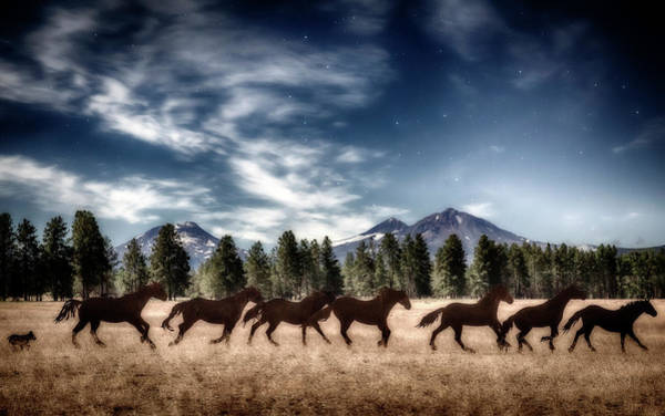 Wall Art - Photograph - Dreaming Of Horses by Cat Connor