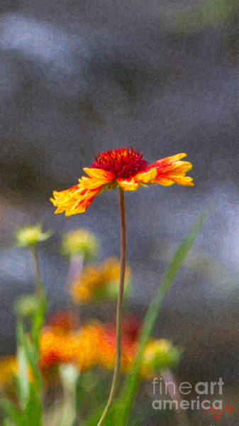 Photograph - Dreaming In Colors Methow Valley Flowers By Omashte by Omaste Witkowski