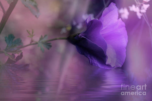 Photograph - Dreaming In Purple by Elaine Teague