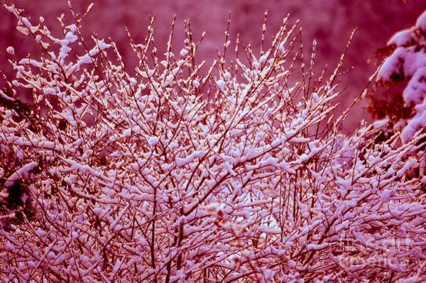 Photograph - Dreaming In Red - Winter Wonderland by Susanne Van Hulst