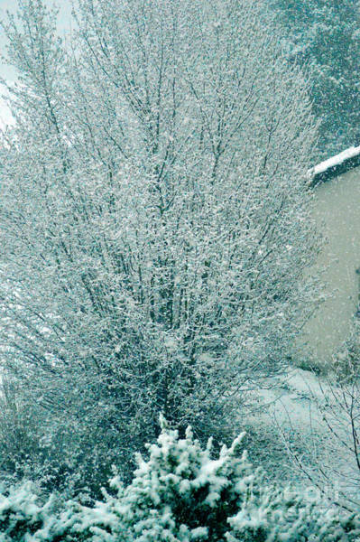 Photograph - Dreaming Of A White Christmas - Winter In Switzerland by Susanne Van Hulst