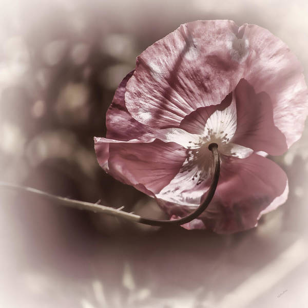 Photograph - Dreaming Of Cosmos by Donna Lee