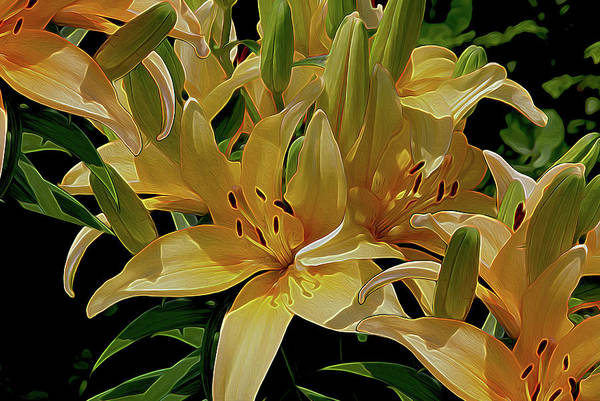 Neon Lights Mixed Media - Dreaming Of Lilies by Lynda Lehmann