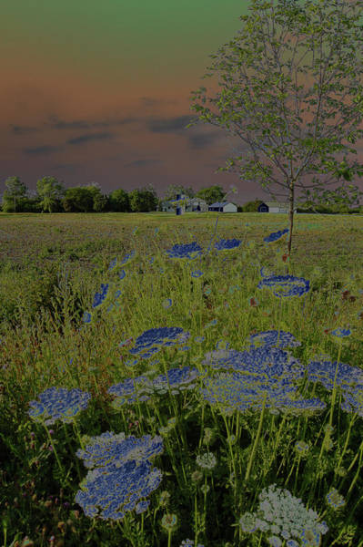 Solarized Photograph - Dreaming Of Queen Annes Lace II by Suzanne Gaff