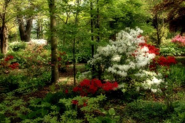 Photograph - Dreaming Of Spring by Sandy Keeton