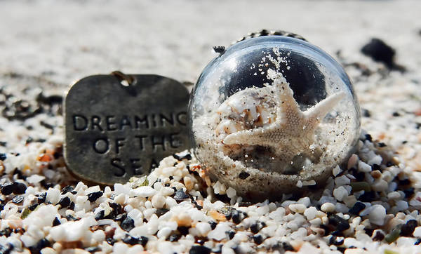Photograph - Dreaming Of The Sea by Pamela Walton