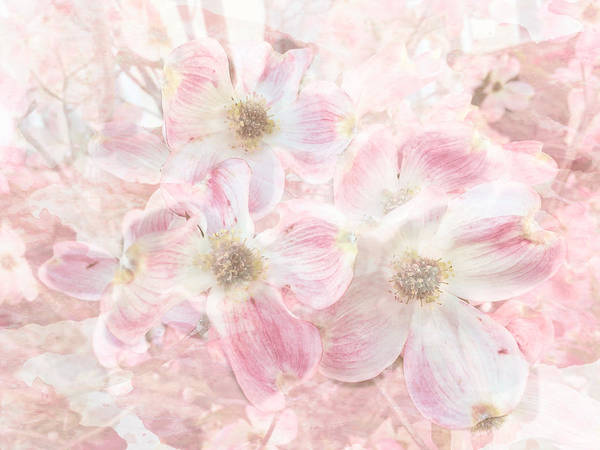 Photograph - Dreaming Pink by Arlene Carmel