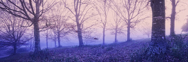 Lavender Mist Wall Art - Photograph - Dreams In The Mist by Debra and Dave Vanderlaan