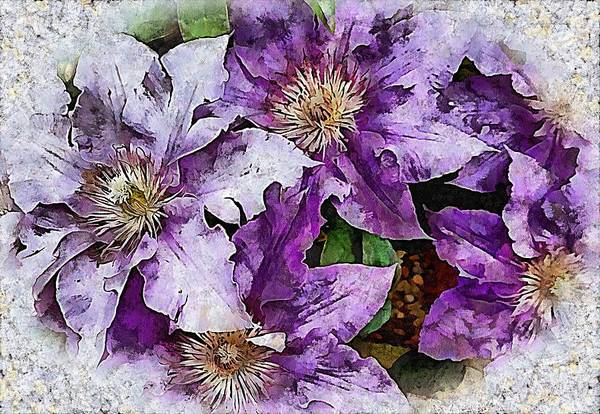 Photograph - Dreams Of Lilac Clematis by Dorothy Berry-Lound