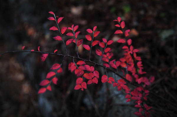 Photograph - Dreams Of Red by Randi Grace Nilsberg