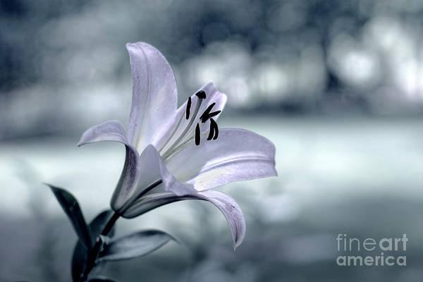 Photograph - When Flowers Dream by Susan Warren