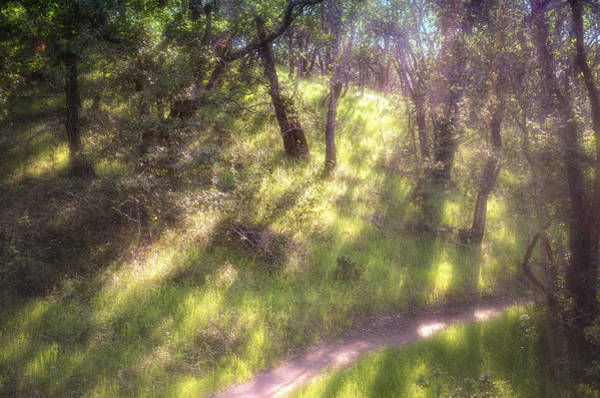 Photograph - Dreamy Afternoon by Peter Dyke