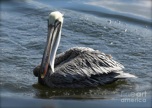Wall Art - Photograph - Dreamy Brown Pelican by Carol Groenen
