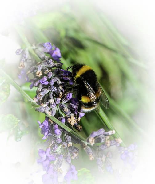 Dreamy Bumble Bee Art Print